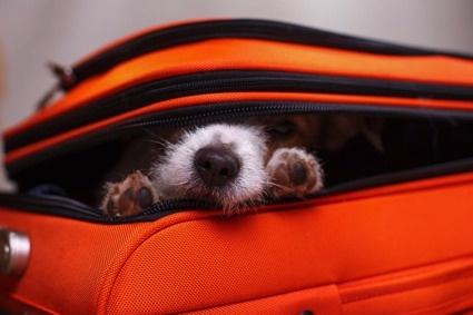 Minne hotelliin koiran kanssa?